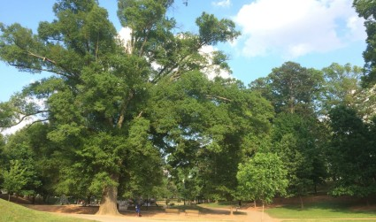 Underrated green space in Charlotte: 3 parks worth a visit