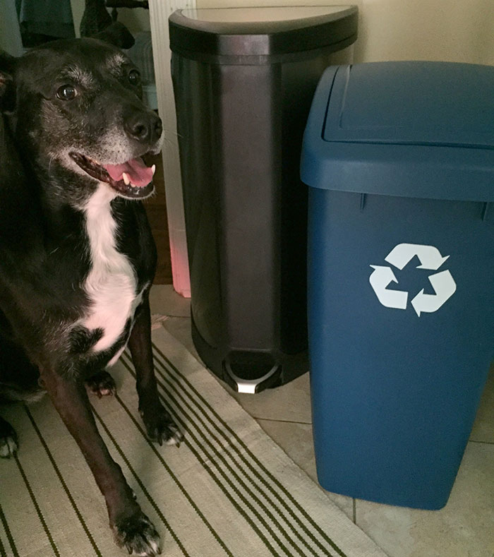 dog-and-a-recycling-bin