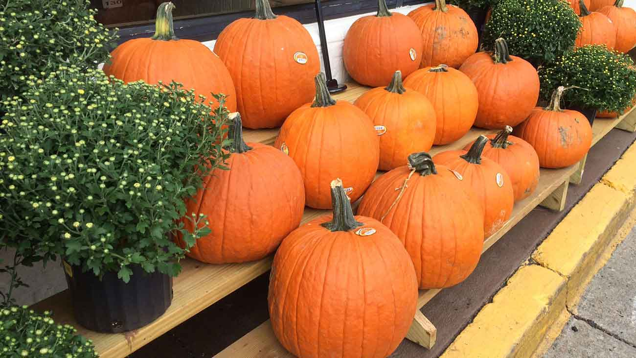GUTS, Charlotte's next-level pumpkin carving contest, is tonight. Here's what to know