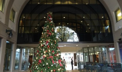 7 Christmas trees you need to see around Charlotte before the season is over, plus their lighting schedules