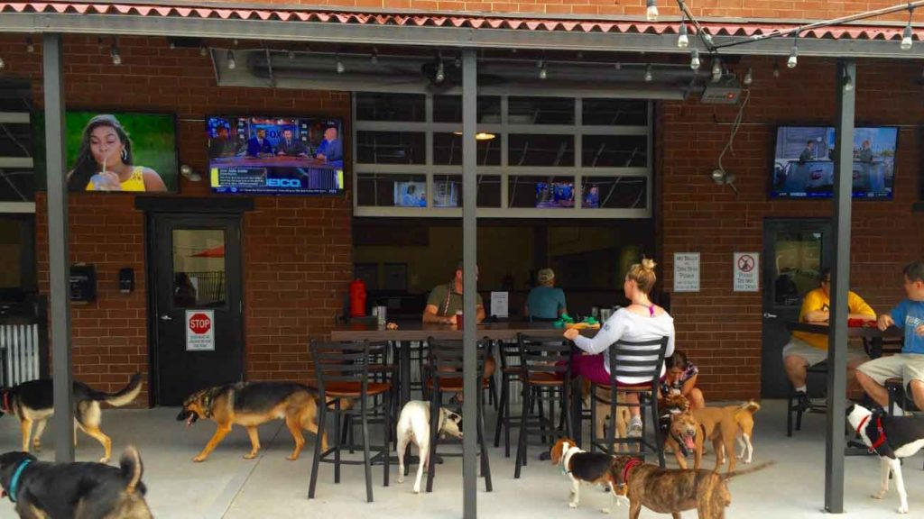 What's the deal with all these young, single Charlotteans foregoing freedom by adopting dogs?