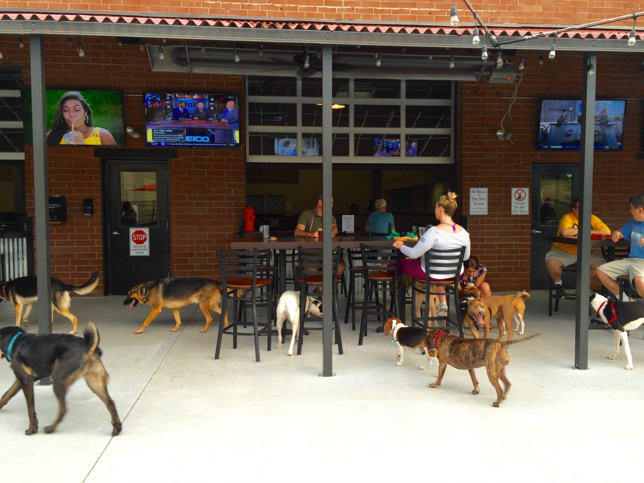 Lucky Dog Bark & Brew is the ideal place to drink with your dog in Charlotte