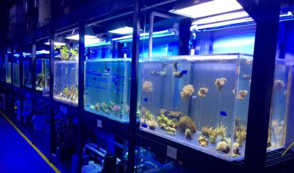 First Look: Behind the scenes aquarium tour at Discovery Place