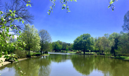 6 ways to better manage your allergies in Charlotte this spring