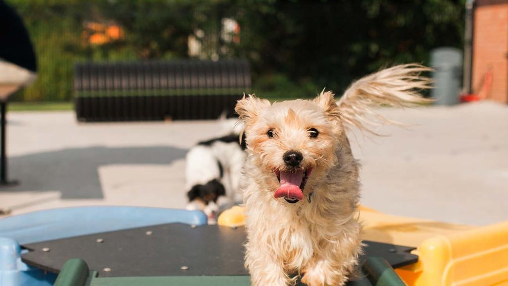 Lucky Dog Bark and Brew's daycare service is genius. Here's how to get it for free.
