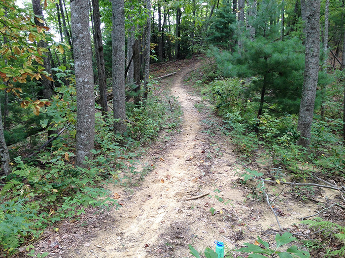 hiking-trail-at-dupont-forest