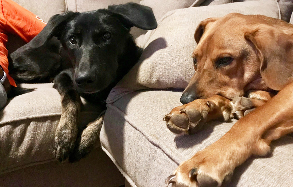 Going on vacation? Here are 7 pet sitters who will have a sleepover with your pet