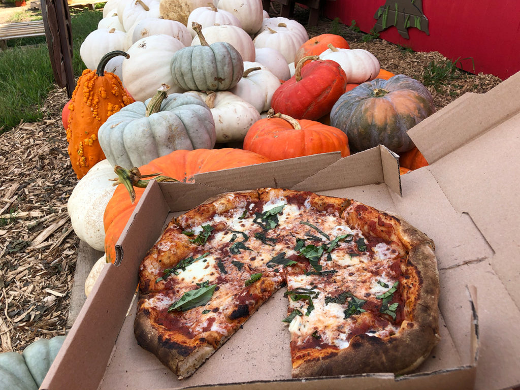 Wise Acres organic farm is open for the fall season with pumpkins and pizza