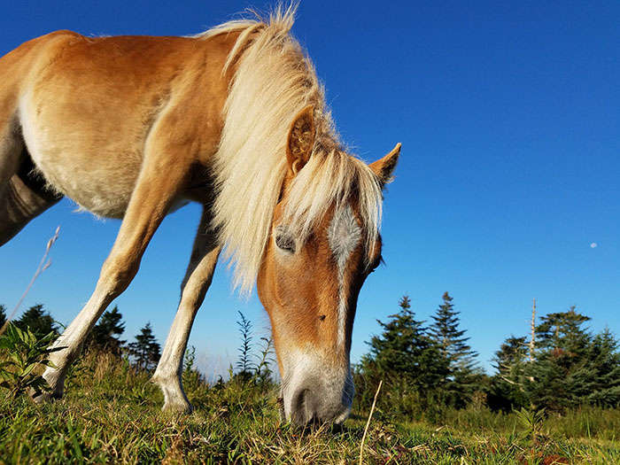 Pony at Grayson Highlands hiking in charlotte hikes