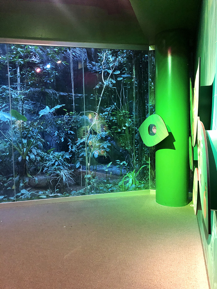 Discovery Place Science sleepover rain forest