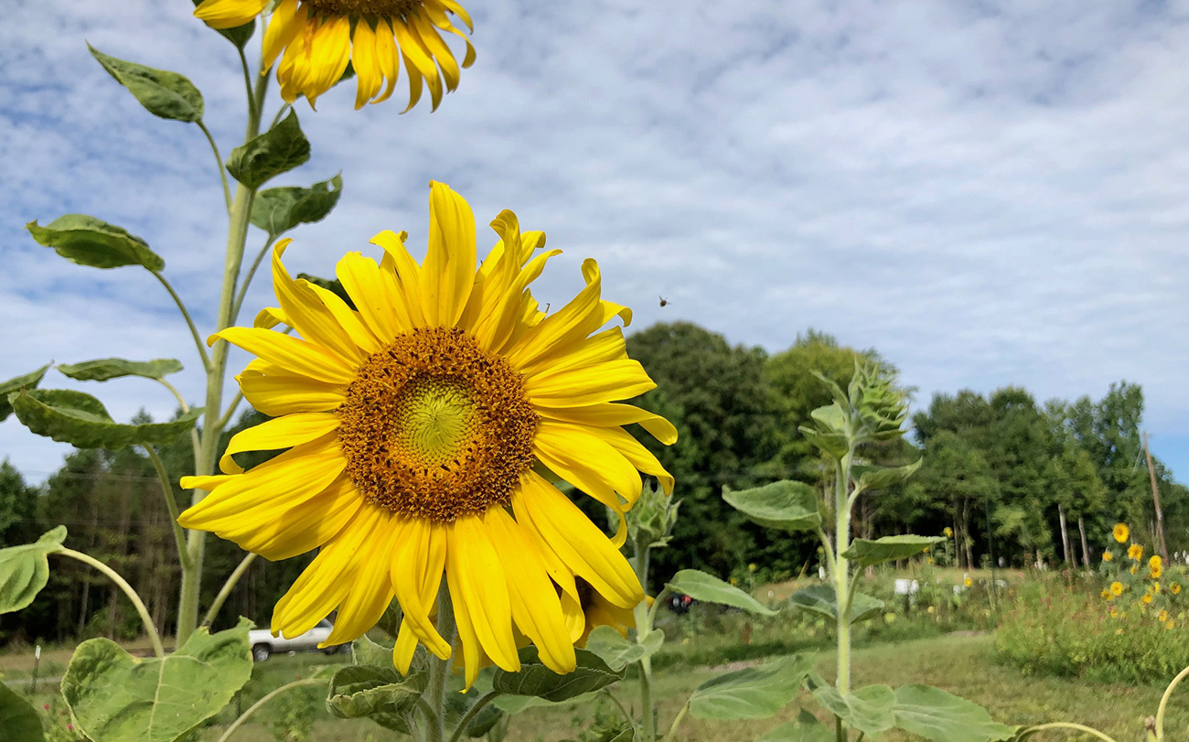 Urban farm offers $14 flower picking by reservation