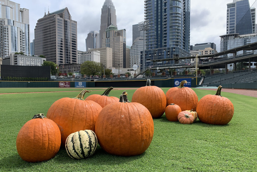 Quick guide to 9 must-visit pumpkin patches near Charlotte