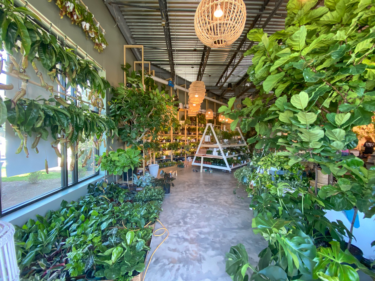 4 cool new plant shops in Charlotte