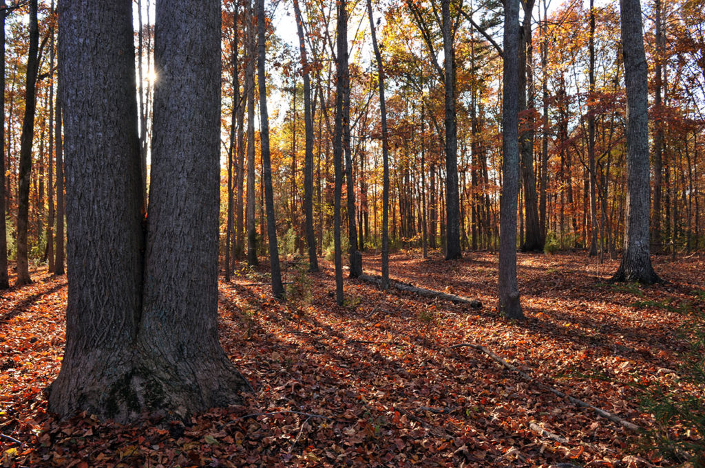 7 trails for fall colors within 50 minutes of Charlotte