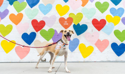 10 most popular dog names and breeds in Charlotte