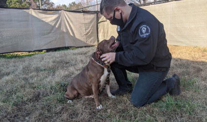 """The Charlotte animal shelter might just earn a """"no-kill"""" designation by the end of 2020. Here's how you can help"""