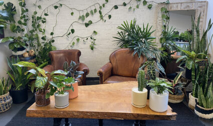 New plant shop inside Lenny Boy Brewing is now open