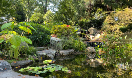 5 local gardens to see spring flowers in Charlotte