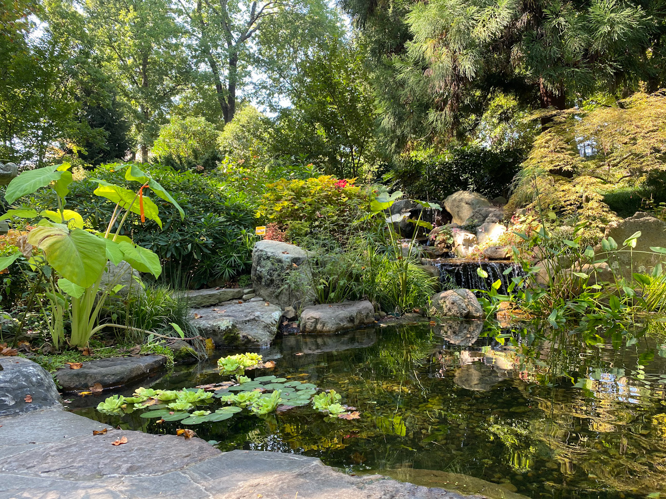 5 local gardens to see flowers in Charlotte