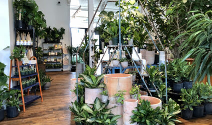 6 cool new plant shops in Charlotte