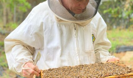 What the bees at Cloister Honey are buzzing about