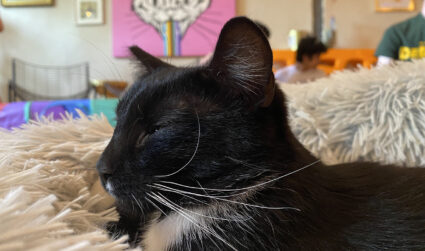 Rent out this cat cafe in NoDa for $95+