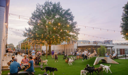 Dog-Friendly Luau Party at Skiptown